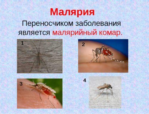 Внимание! Малярия – острое инфекционное заболевание…